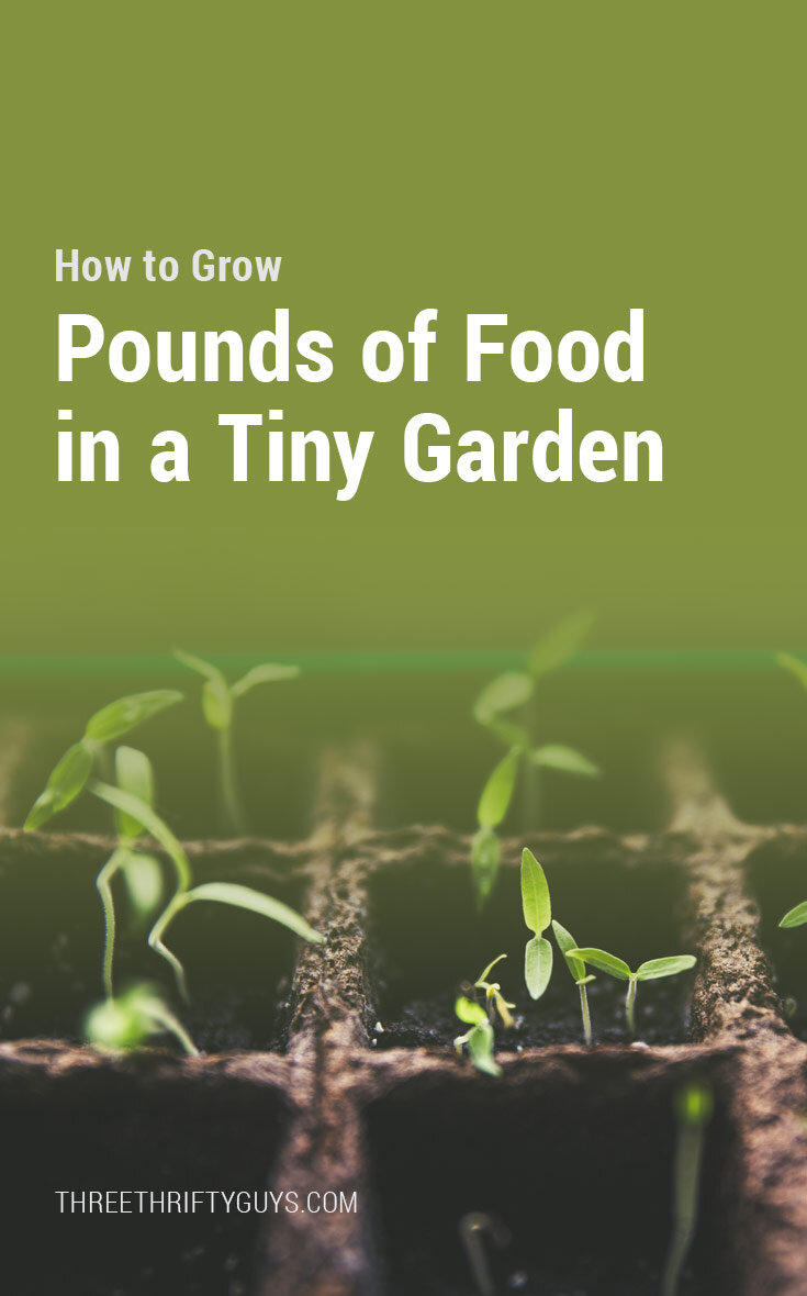 how to grow pounds of food in tiny garden