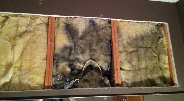 Mold in the insulation